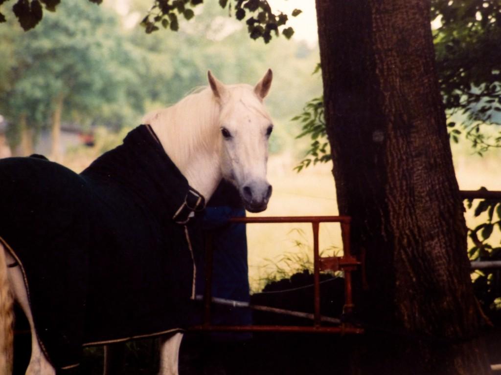 Beim Pferd begegnest du immer dir selbst